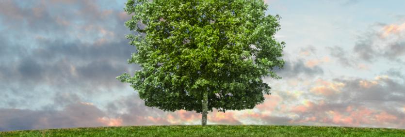 Geef een keer een boom cadeau